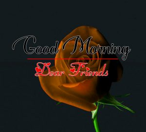 All Good Morning Wallpaper With Red Rose