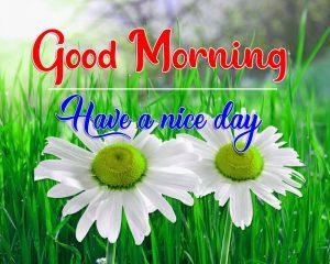Beautiful Flower Flower Good Morning Images