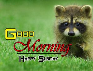 Beautiful Good Morning Free Download
