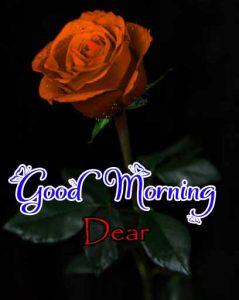 Beautiful Good Morning Free Hd Photo
