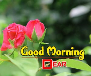 Beautiful Good Morning Free Pictures