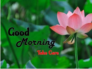 Beautiful Good Morning Hd Images Free