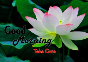 Beautiful Good Morning Hd Pictures Free