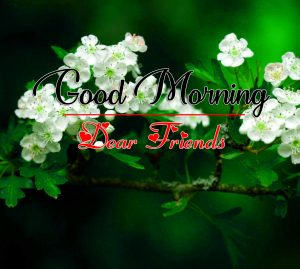 Best All Good Morning Images