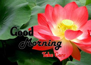 Best Good Morning Download Hd Free 1