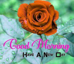 Best Good Morning Download Images 3