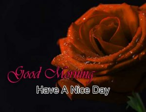 Best Good Morning Download hd