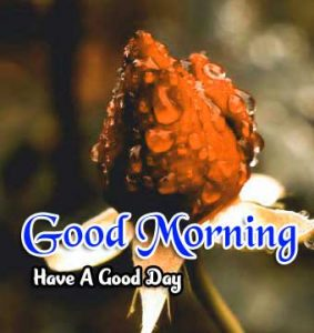 Best Good Morning Hd Images 1