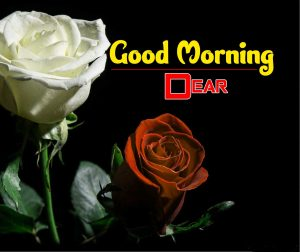 Best Good Morning Hd Pictures