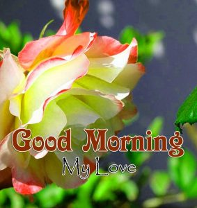 Best Good Morning Images 1