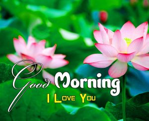 Best Good Morning Images Pictures 6
