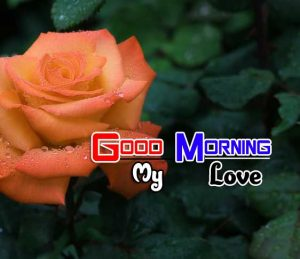 Best Good Morning Pictures Hd 3