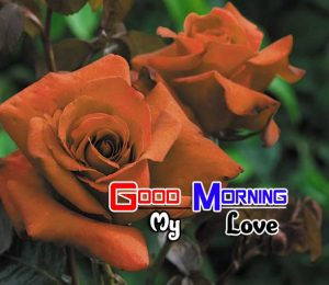 Best Good Morning Pictures Hd