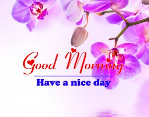 Best Good Morning all Images Pics Download