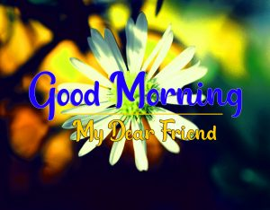 Best New Good Morning all Images Pics Download