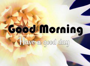 Best Quality Flower Good Morning Wallpaper