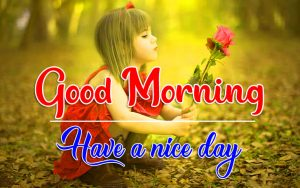 Best Quality Flower Good Morning Wallpaper Download Free