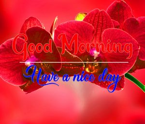 Best Quality Full HD Flower Good Morning Images Download