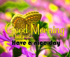 Butterfly Good Morning Images Pics Download