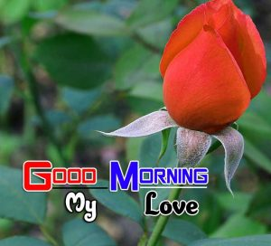 Cute Good Morning Images 2