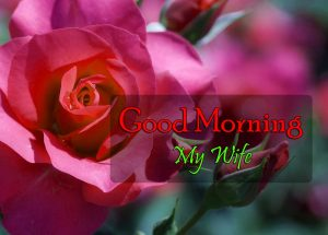 Cute Good Morning Images Free