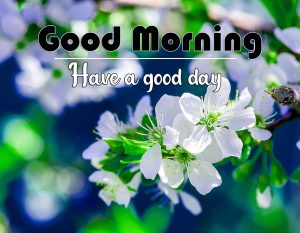 Flower Free Flower Good Morning Images