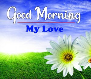 Flower Good Morning Images Wallpaper 2