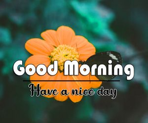 Flower Good Morning Images Wallpaperr