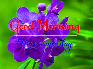 Flower Good Morning Photo for Facebook 1