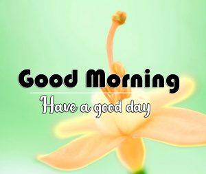 Flower Good Morning Photo for Whatsapp
