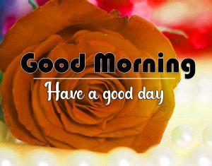 Flower Good Morning Pics Download 4