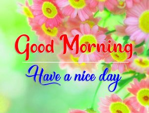 Flower Good Morning Pics New Download 3
