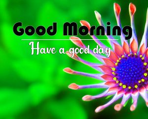 Flower Good Morning Pics New Download