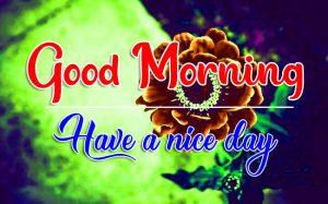Flower Good Morning Pics Nw
