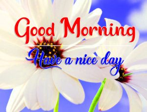 Flower Good Morning Pics Pictures