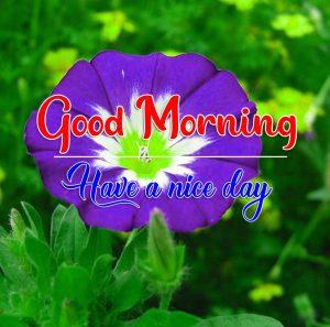 Flower Good Morning Wallpaper HD