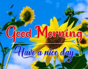 Flower Good Morning Wallpaper With Sunflower