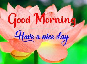 Free Flower All Good Morning Wallpaper