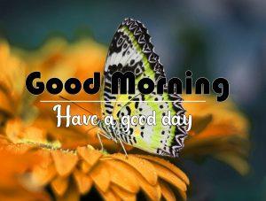 Free Flower Good Morning Wallpaper