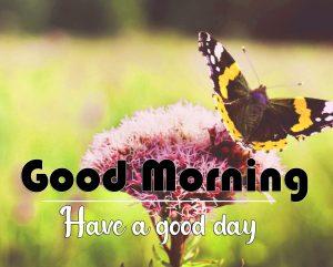 Free Flower Good Morning Wallpaper Download 2
