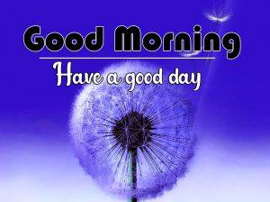 Free Flower Good Morning Wallpaper for Whatsapp