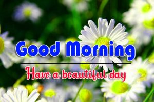 Free Full HD Good Morning Images Pics Pictures Download