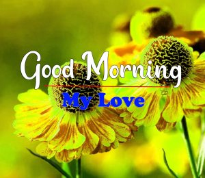 Free Good Morning Images Pics Download