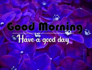 Free Good Morning Images Pics New Download