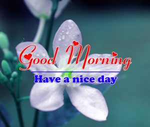 Free Good Morning all Images Pics