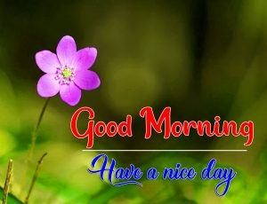 Free HD Good Morning Images Pics Download 3