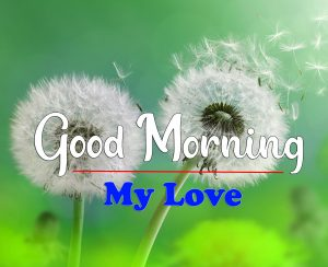 Free HD Good Morning Images Pics Download