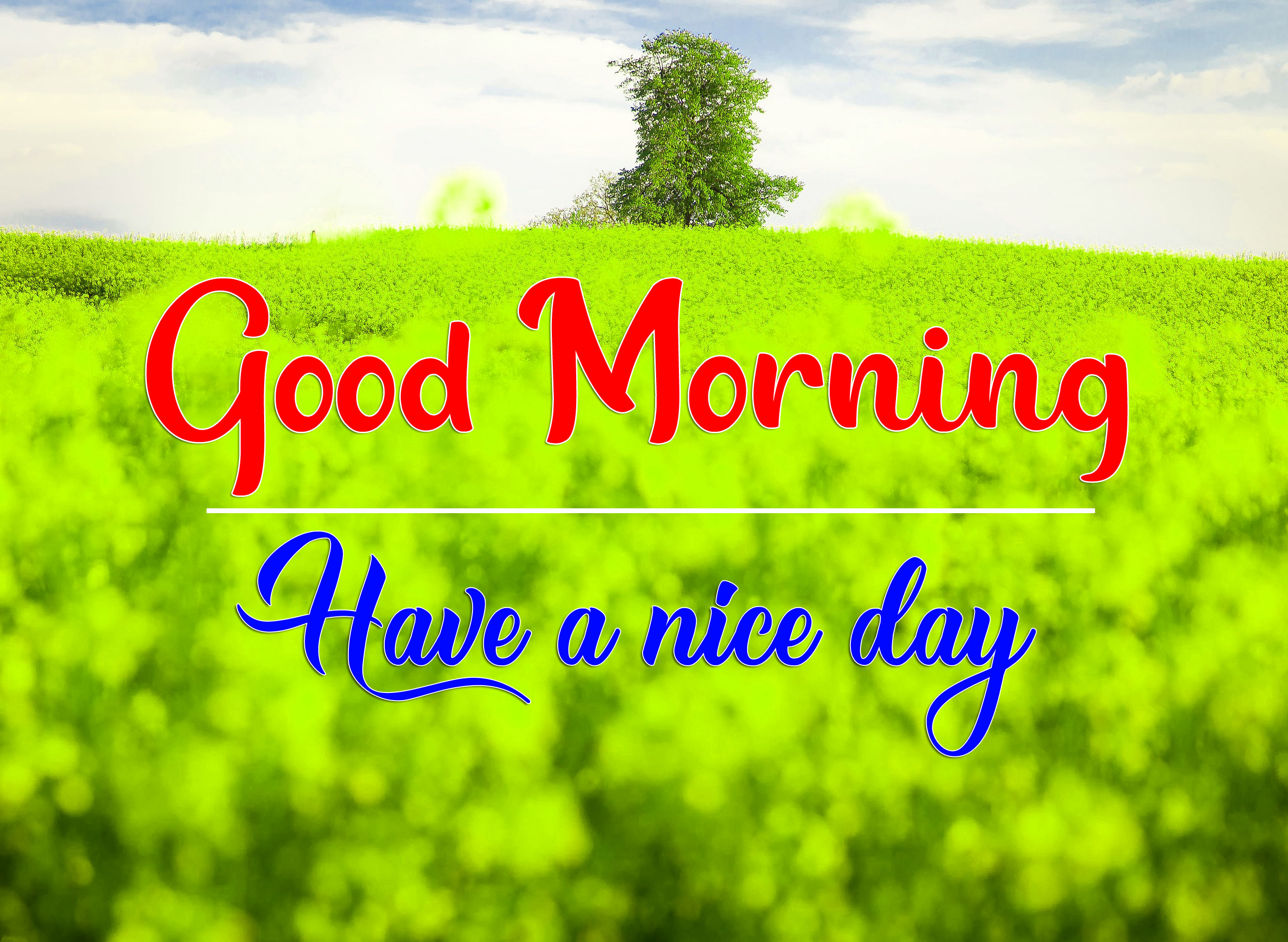 98+ good morning have a nice day images download