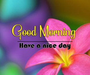 Full HD Good Morning Images Wallpaper With Flower