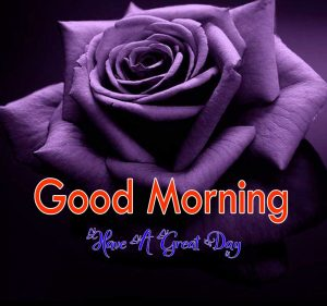 Good Morning Hd Free Wallppaer 1